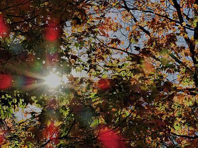 Ma Photograph - Autumn Sunshine by Bill Dussault