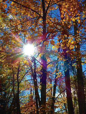 Photograph - Autumn Sunshine by Cristina Stefan