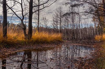 Mud Season Photograph - Autumn Swamp by Dmytro Korol
