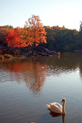 Photograph - Autumn Swan by James Kirkikis