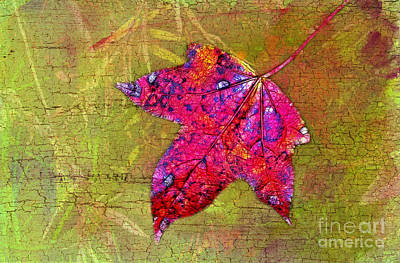 Photograph - Autumn Sweetgum Leaf by Judi Bagwell