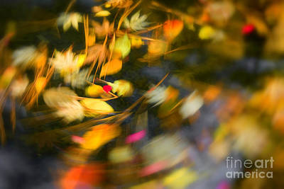 Photograph - Autumn Swirl by Idaho Scenic Images Linda Lantzy