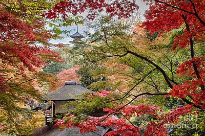 Photograph - Autumn  by Tad Kanazaki