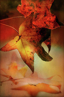Photograph - Autumn Takes Hold by Diana Angstadt