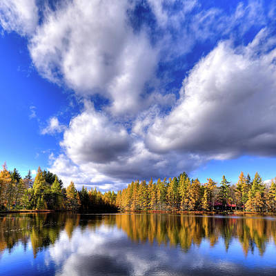 Photograph - Autumn Tamaracks by David Patterson