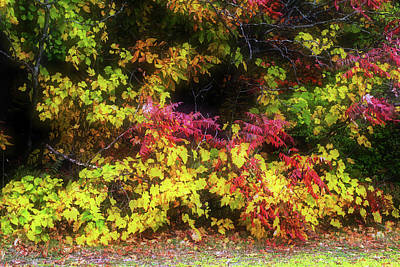 Photograph - Autumn Tapestry by Jim Vance