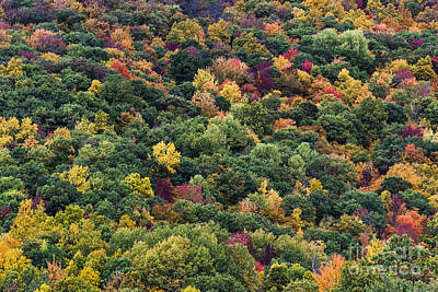 Rutland Photograph - Autumn Tapestry by John Greim