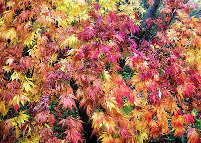Photograph - Autumn Tapestry  by Shirley Mitchell