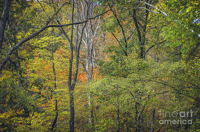 Photograph - Autumn Tapestry by Tamara Becker