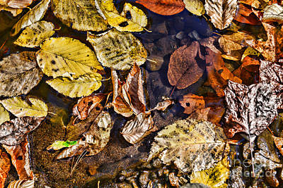 Autumn Leaf On Water Photograph - Autumn The Color Of Nature by Paul Ward