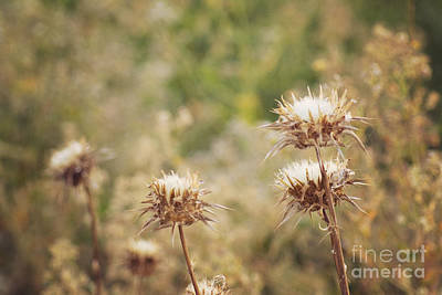 Photograph - Autumn Thistles by Cindy Garber Iverson