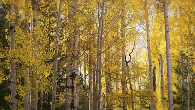 Photograph - Autumn Through The Aspens  by Saija Lehtonen