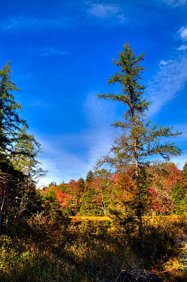 Photograph - Autumn Through The Trees At Fly Pond by David Patterson