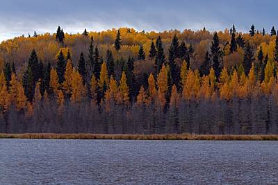 Prince Albert National Park Photograph - Autumn Tiers by Larry Ricker