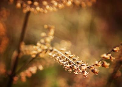 Photograph - Autumn Tones by Heather Applegate