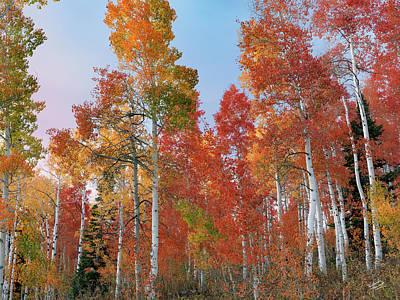 Photograph - Autumn Tones by Leland D Howard