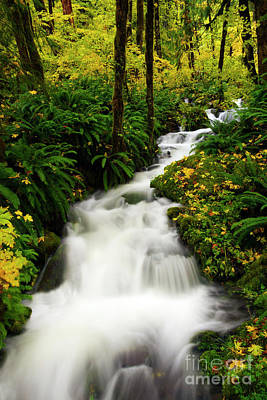 Photograph - Autumn Torrent by Mike Dawson
