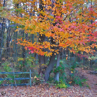 Manip Photograph - Autumn Trail At Lums by Stephen Kinsey