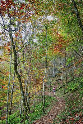 Photograph - Autumn Trail by David A Lane