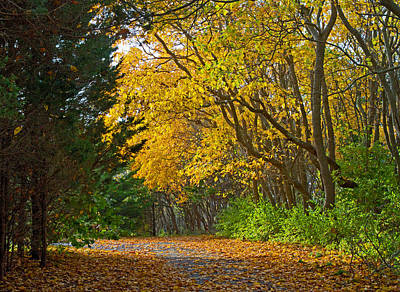Photograph - Autumn Trail by David Freuthal