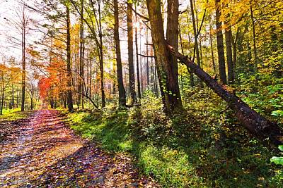 Autumn Trail Art Print by Debra and Dave Vanderlaan