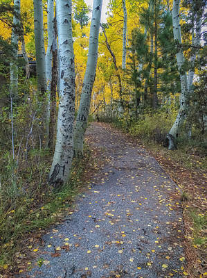Photograph - Autumn Trail by Jonathan Nguyen