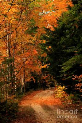 Photograph - Autumn Trail by Marcia Lee Jones