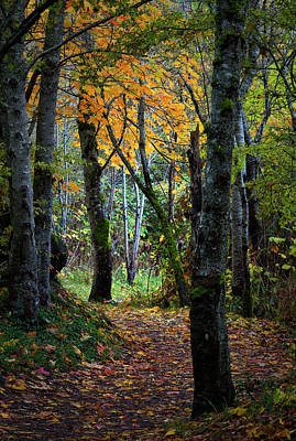Photograph - Autumn Trail by Randy Hall