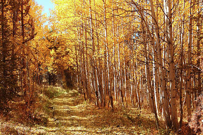 Photograph - Autumn Trails by Marie Leslie