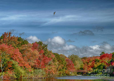 Photograph - Autumn Tranquility by Judy Hall-Folde