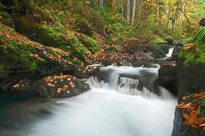 Autumn Treasure Original by Mike  Dawson