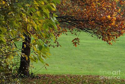 Photograph - Autumn Tree 1 by Rudi Prott