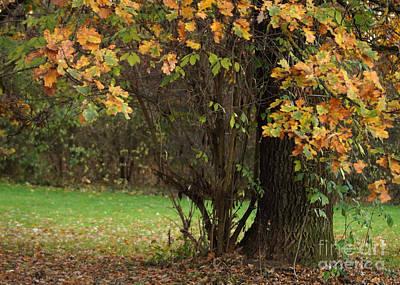 Photograph - Autumn Tree 2 by Rudi Prott