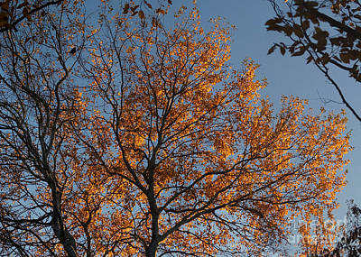 Photograph - Autumn Tree 4 by Rudi Prott