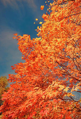 Photograph - Autumn Tree And Clouds 2 by Gary Slawsky