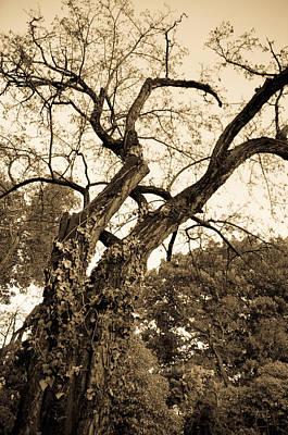 Photograph - Autumn Tree by Andrea Mazzocchetti