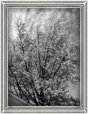 At Poster Digital Art - Autumn Tree At Jim Beam In Black And White by Marian Bell