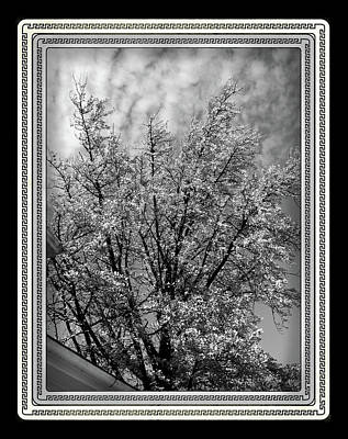 At Poster Digital Art - Autumn Tree At Jim Beam In Black And White With Black Border by Marian Bell