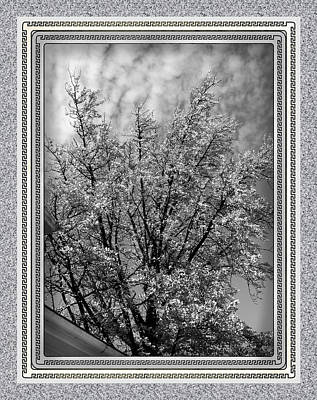 At Poster Digital Art - Autumn Tree At Jim Beam In Black And White With Mottled Grey Border by Marian Bell