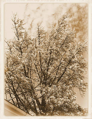 At Poster Digital Art - Autumn Tree At Jim Beam In Sepia Too by Marian Bell