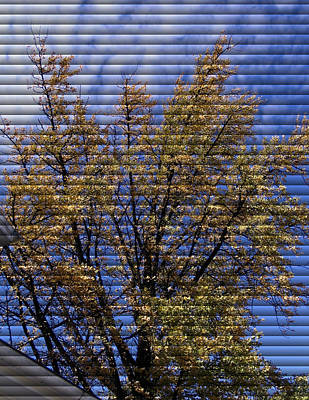 At Poster Digital Art - Autumn Tree At Jim Beam - Through The Blinds by Marian Bell