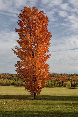 Photograph - Autumn Tree by Brent L Ander