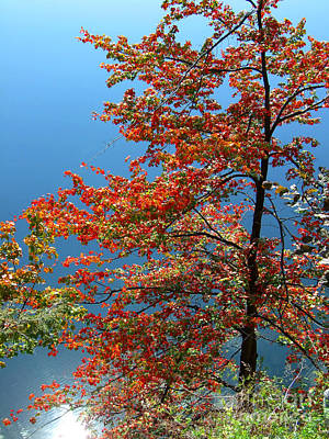 Photograph - Autumn Tree By Lake Photograph by Kristen Fox