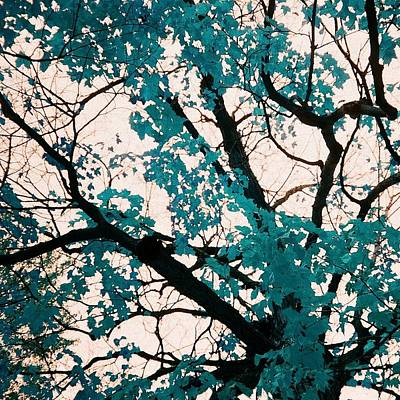 Abstract Airplane Art Rights Managed Images - Autumn Tree Royalty-Free Image by Cassie Peters