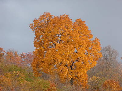 Art Print featuring the photograph Autumn Tree by Donald C Morgan