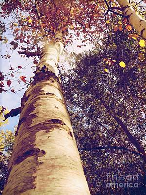 Photograph - Autumn Tree by France Laliberte