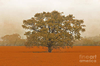 Photograph - Autumn Tree In A Field Of Orange by Terri Waters