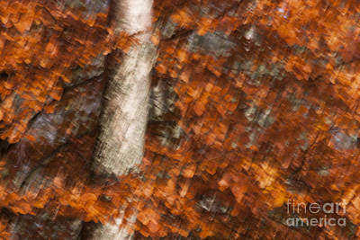 Photograph - Autumn Tree by Karen Van Der Zijden