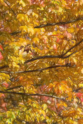 Nature Abstract Drawing - Autumn Tree Leaves by David Letts