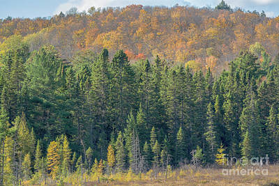Photograph - Autumn Tree Line by Cheryl Baxter